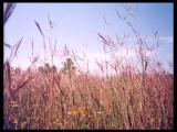 Video: Flora of Stearns County, Minnesota; Plant Life on the Prairies