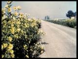 Video: Flora of Stearns County, Minnesota; Plants of Fields, Roadsides, and Waste Area