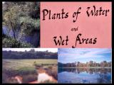 Video: Flora of Stearns County, Minnesota; Plants of Water and Wetlands